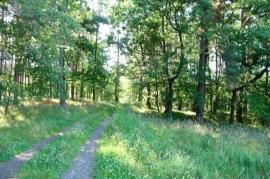 Działka rolna w Sterkowie