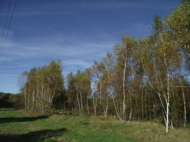 Działka siedliskowa 3648m2 - Radomia-Orzewo