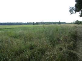 Na sprzedaż dzialka leśna zlokalizowana w Kiełpinie